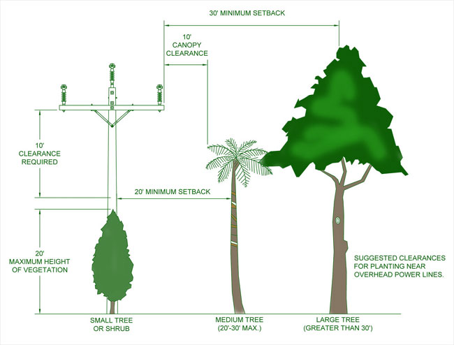 Tree planting guideline with recommended measurements